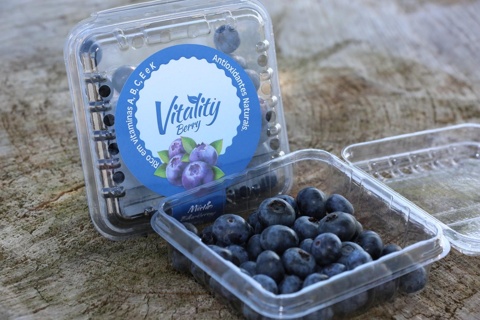 Produção de frutas finas utiliza sistema de energia solar e tem economia em SC - Notícias - Plantão Diário