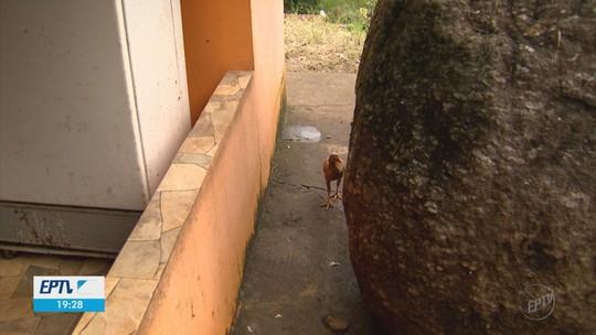 Dona de casa que quase foi atingida por pedra gigante em MG fala sobre acidente: 'desmaiei'