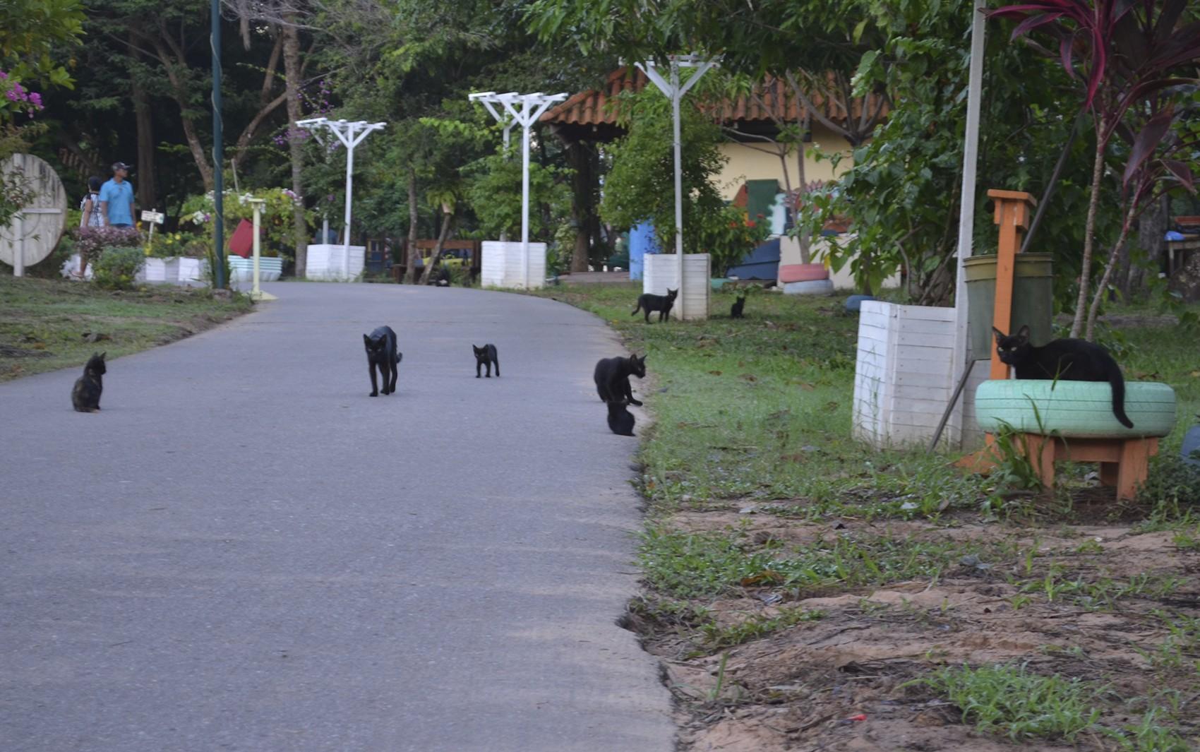 ONG organiza campanha para encontrar lar para gatos abandonados em Santarém
