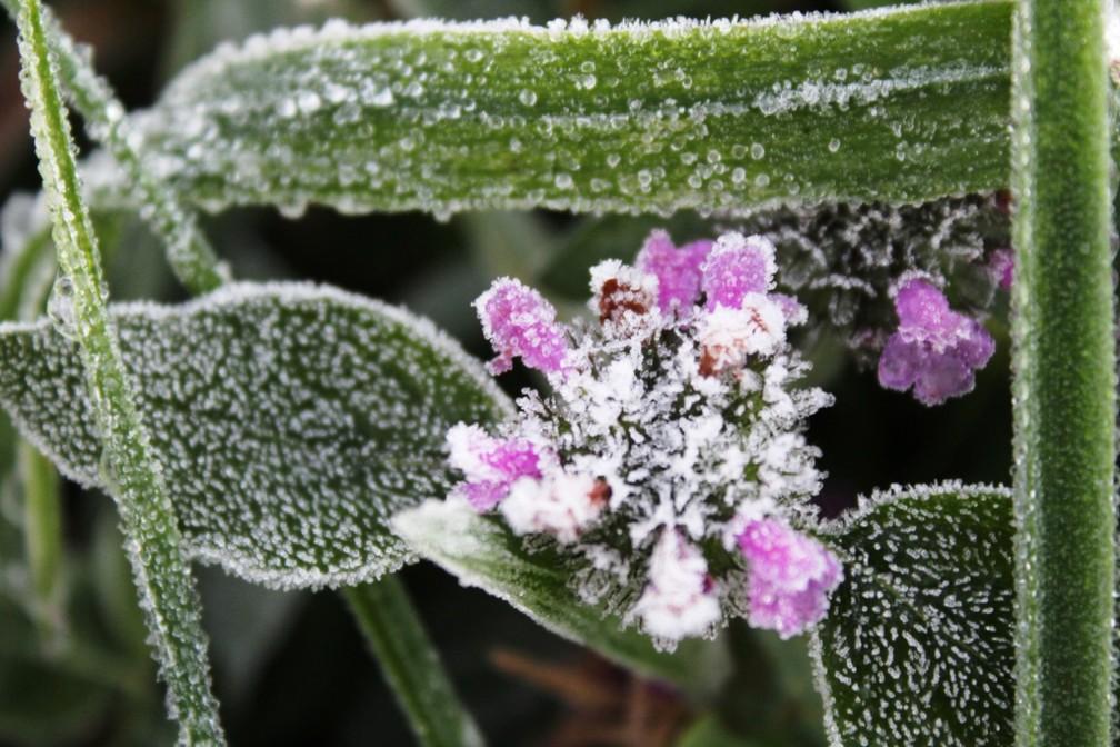Vegetação amanheceu com uma fina camada de gelo em Urupema — Foto: Marleno Muniz/Prefeitura de Urupema/Divulgação