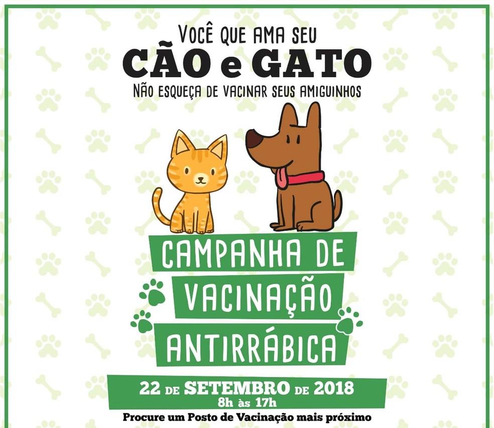 d66f23c7b ... Campanha de Vacinação Antirrábica é realizada neste sábado (22) em  Caruaru — Foto