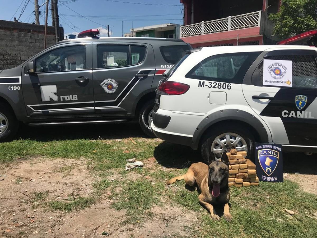 Com ajuda de cão policial, Rota apreende cerca de 20 quilos de drogas em casas de Itaquaquecetuba