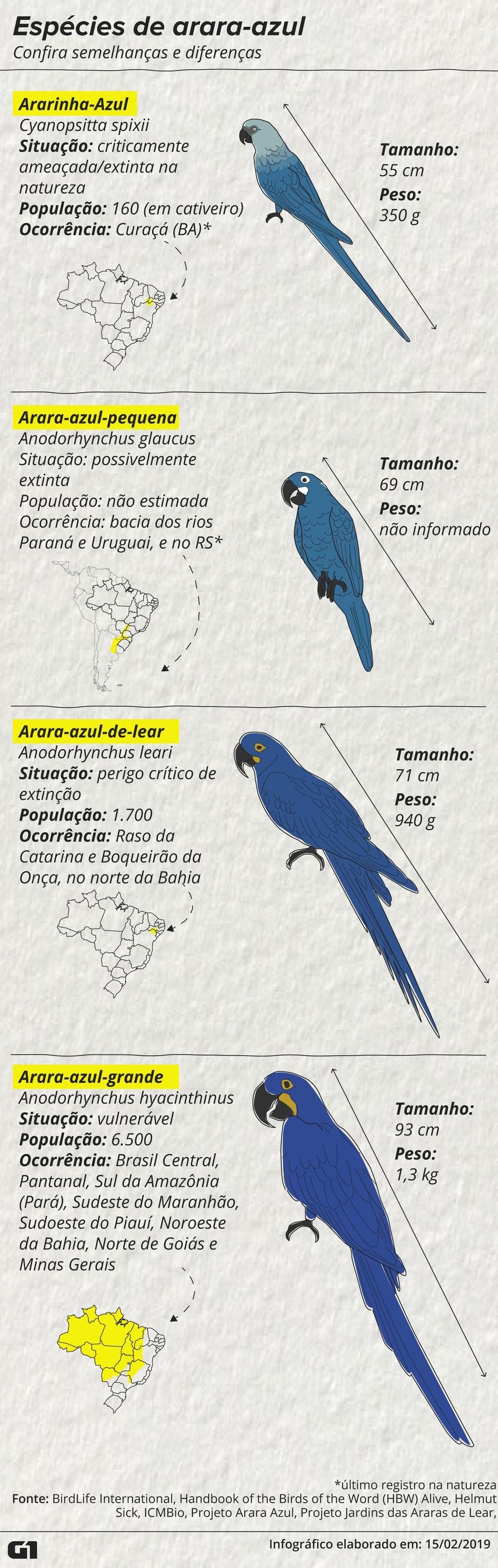 Espécies de arara-azul — Foto: Roberta Jaworski / G1