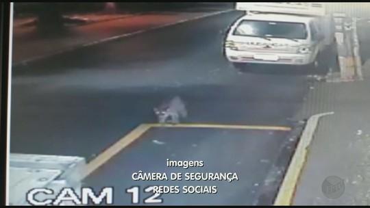 'Achei que estivesse mentindo', diz recepcionista ao saber por colega sobre onça na porta do hotel em Ribeirão Preto