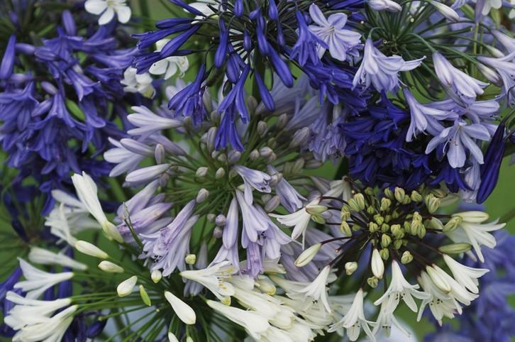 9 flores para cultivar na varanda (Foto: Getty Images)