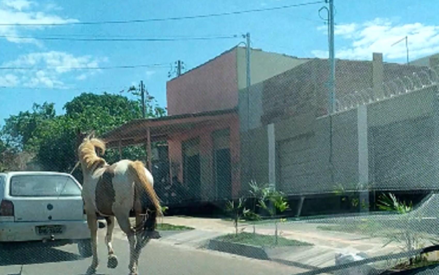 Morador filma cavalo sendo puxado por carro em Goiânia