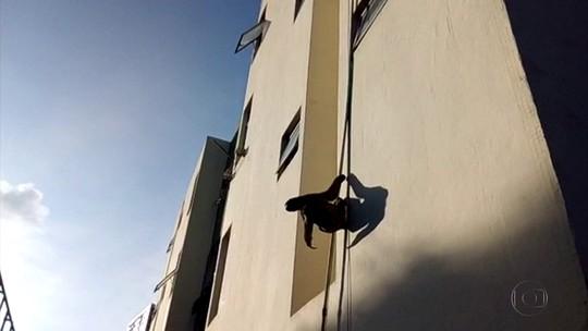 Preguiça é flagrada escalando prédio na Zona Oeste do Recife
