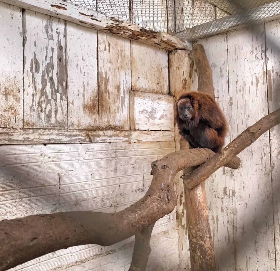 Mantenedouro abriga mais de 400 animais silvestres em Santa Maria