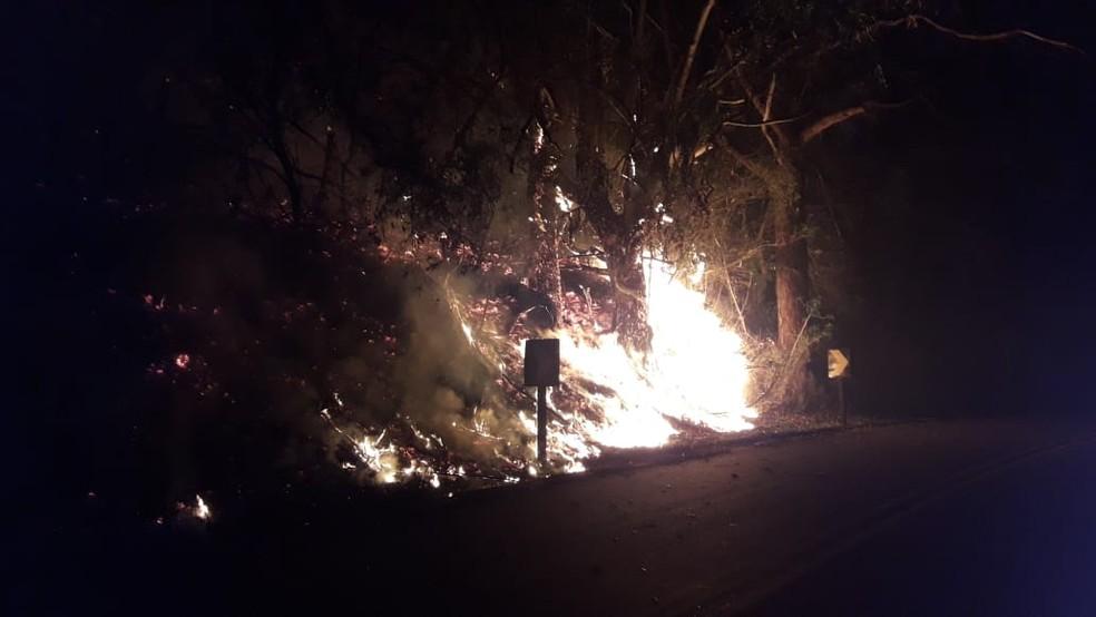 Incêndio atinge área no lavandário em Cunha, SP — Foto: Defesa Civil/Divulgação