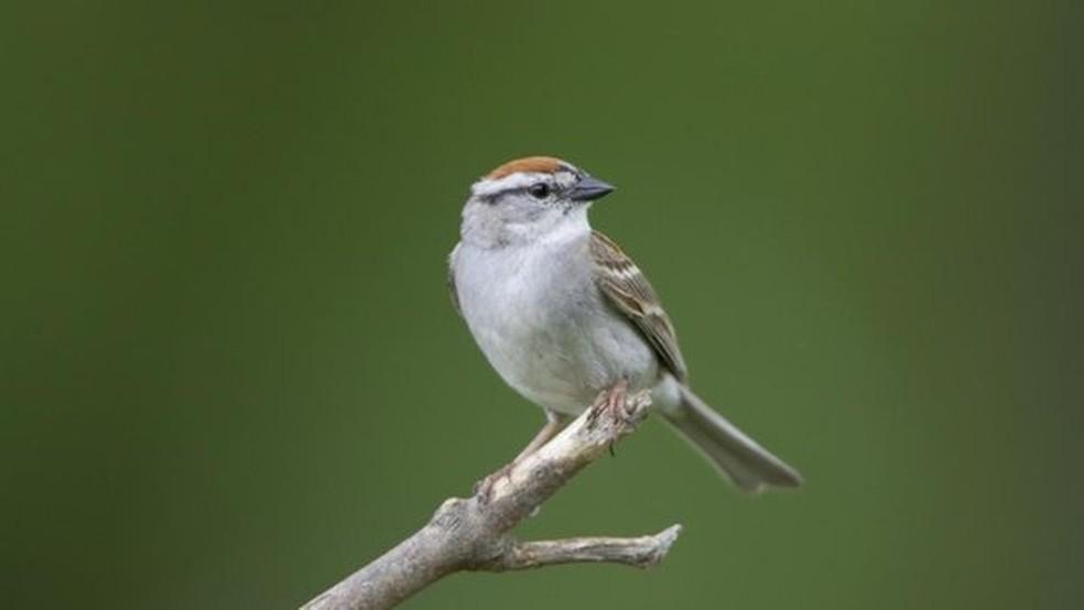 Uso intensivo de herbicidas e pesticidas se tornou um 'tempero' nada agradável aos pássaros na zona rural (Foto: M.K. RUBEY)