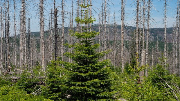 Floresta (Foto: Getty Images)