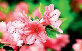 5 plantas que melhoram a qualidade do ar em casa