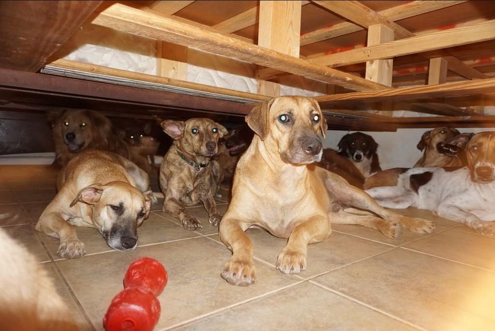 Parte dos cachorros resgatados — Foto: Chella Phillips/Reprodução