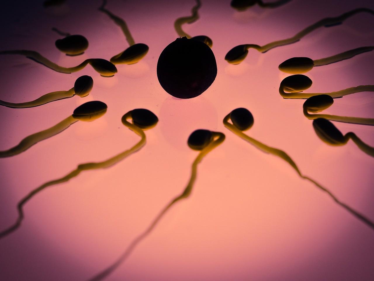 Fertilidade pode estar associada ao tamanho do pês (Foto: Pixabay)