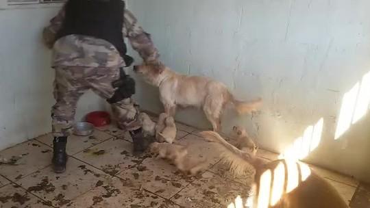 Após denúncia, 12 cachorros abandonados são resgatados de casa no DF