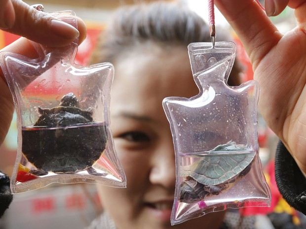 Mulher exibe pequenas tartarugas dentro de sacos plásticos, à venda em uma loja de Pequim, na China. Cada saco contém oxigênio e líquido nutritivo capaz de manter o animal vivo por dois meses. As peças servem de 'amuleto' e saem por cerca de R$ 3,20 cada. (Foto: Kim Kyung-Hoon/Reuters)