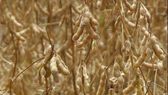 Safra de soja do Brasil deve ser menor por conta da seca; PR é estado que mais sofreu