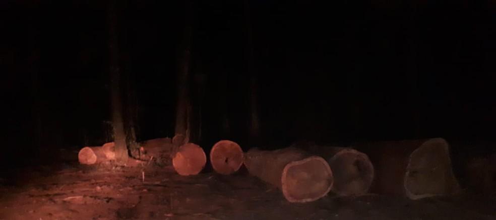 Toras de madeira eram retiradas ilegalmente de terra indígena Karitiana em RO (Foto: Polícia Militar Ambiental/ Divulgação)