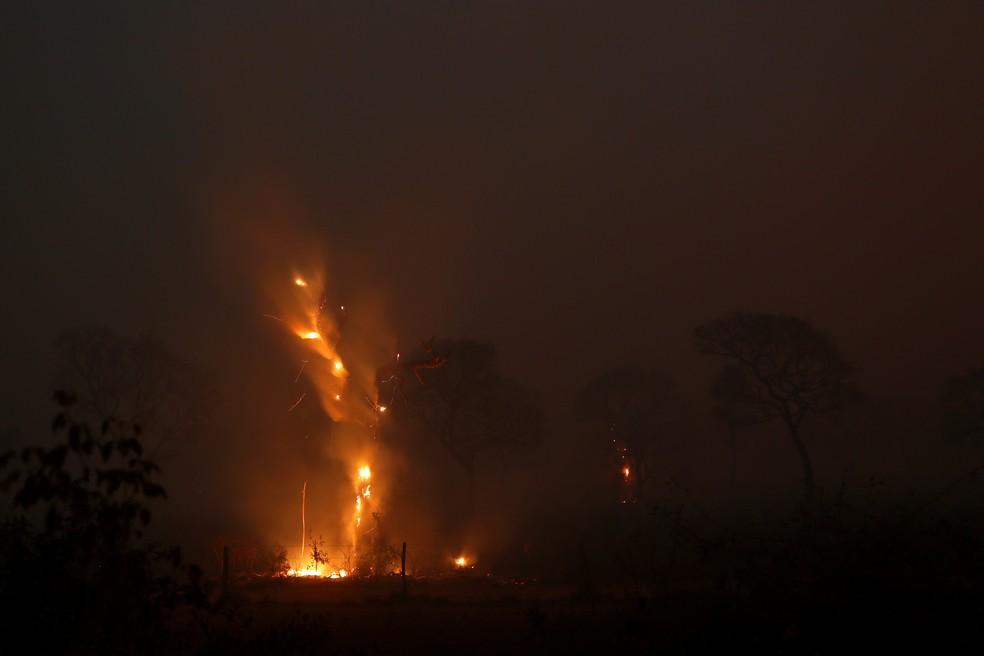 Árvore queima em incêndio no Pantanal, em Poconé (MT), no dia 29 de agosto. — Foto: Amanda Perobelli/Reuters