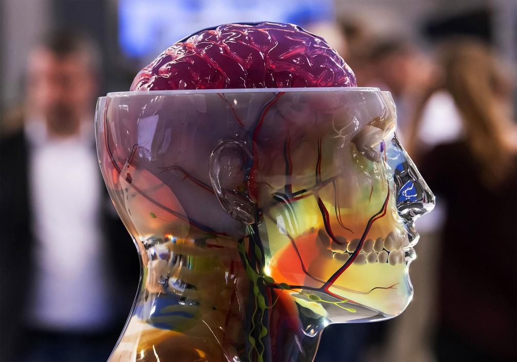 25 de junho - Visitantes observam a escultura 3D colorida de um crânio humano com o cérebro exposto no estande da empresa Stratasys durante as feiras internacionais FabCon 3.D e Rapid.Tech na Messe Erfurt, na cidade de Erfurt, Alemanha — Foto: Jens Meyer/AP