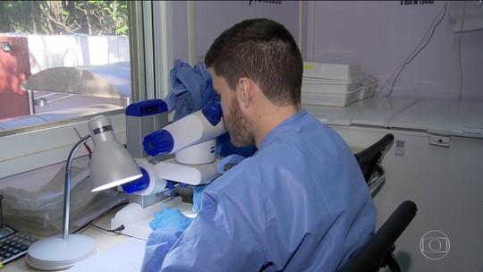 2,6 mil casos suspeitos de pacientes afetados por malformações do zika ainda são investigados depois de 4 anos