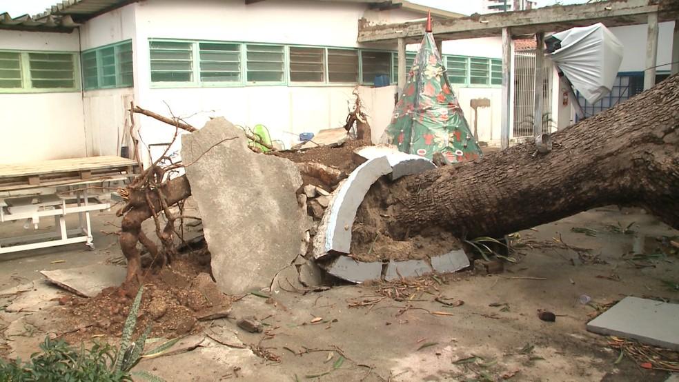 Árvores caíram com o impactos das fortes chuvas registradas em municípios da Paraíba — Foto: Reprodução/TV Paraíba