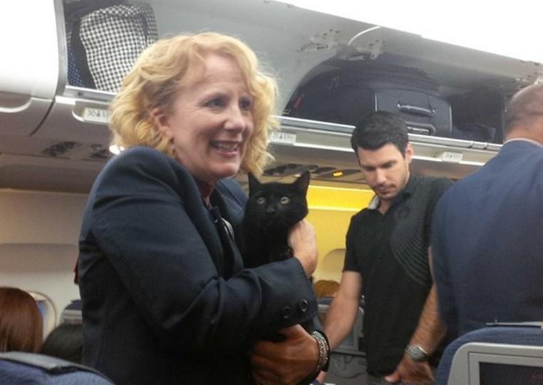Gato preto foi encontrado escondido debaixo de poltrona durante voo (Foto: Reprodução/Twitter/Kath Thompson )