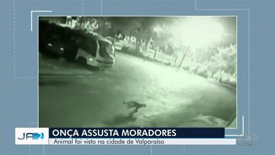 Onça circula nos arredores de escola em Valparaíso de Goiás e assusta moradores; vídeo