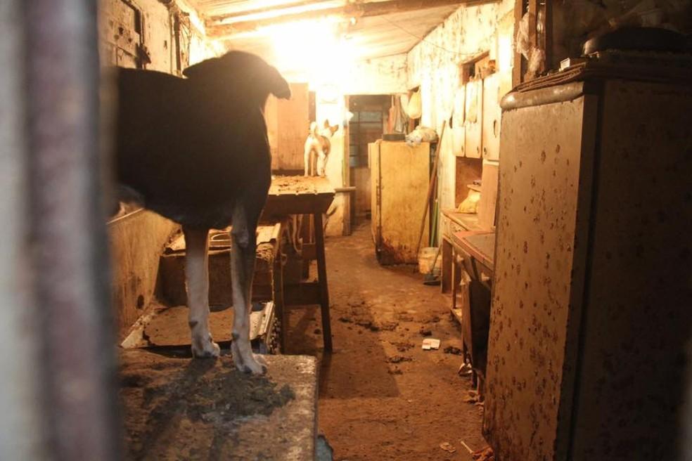 Segundo o GPA, alguns ainda cães não viram a luz do dia (Foto: Divulgação/GPA)