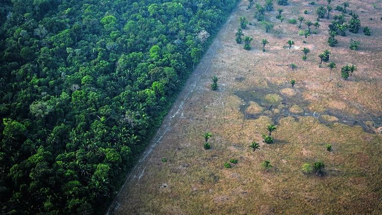 Dentre os biomas, o levantamento do MapBiomas aponta que a Amazônia foi o que mais perdeu área nativa nos últimos 34 anos (Foto: Getty Images)