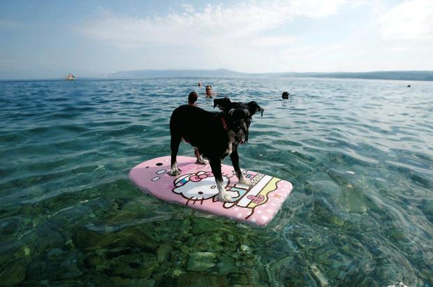 Croácia ganha praia e bar para cachorros (Foto: Antonio Bronic/Reuters)