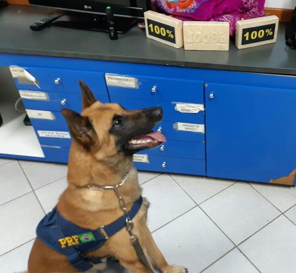 Cães farejadores ajudam a encontrar mochila com pasta base de cocaína  — Foto: Polícia Rodoviária Federal