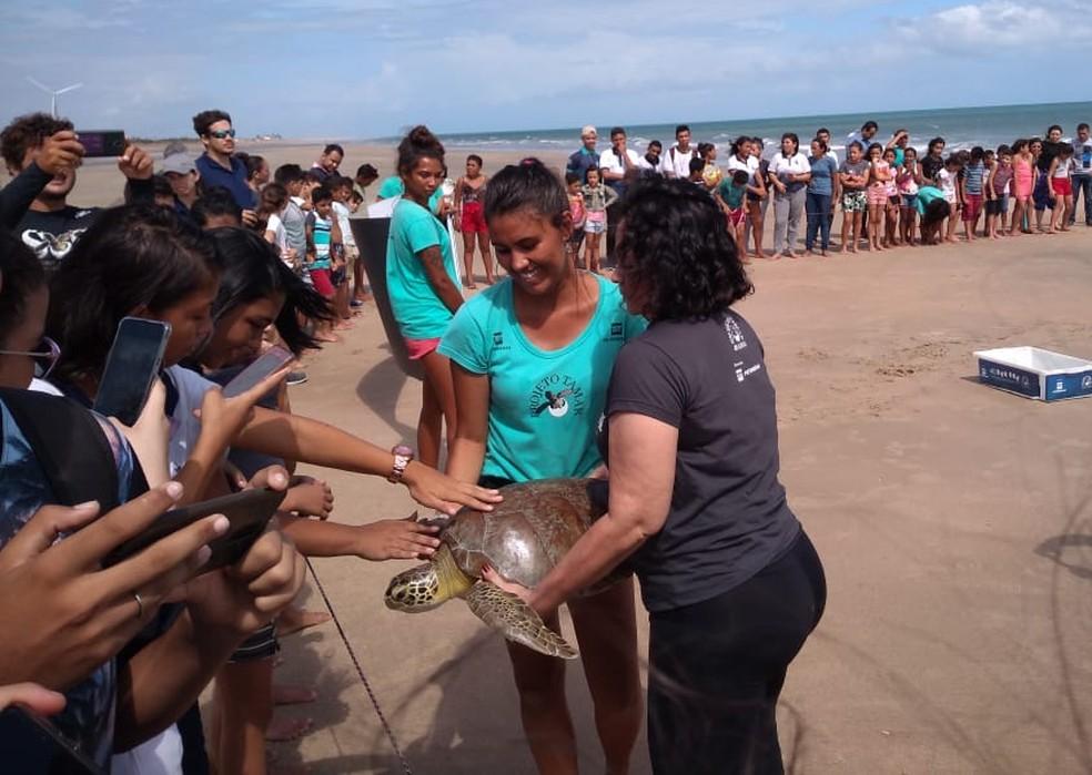 População acaricia tartaruga antes de soltura no mar da Praia de Almofala, no Ceará — Foto: Divulgação/Projeto Tamar