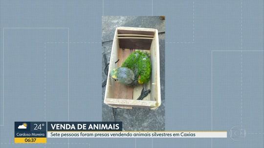 Polícia prende sete pessoas vendendo animais silvestres em feira livre, na Baixada