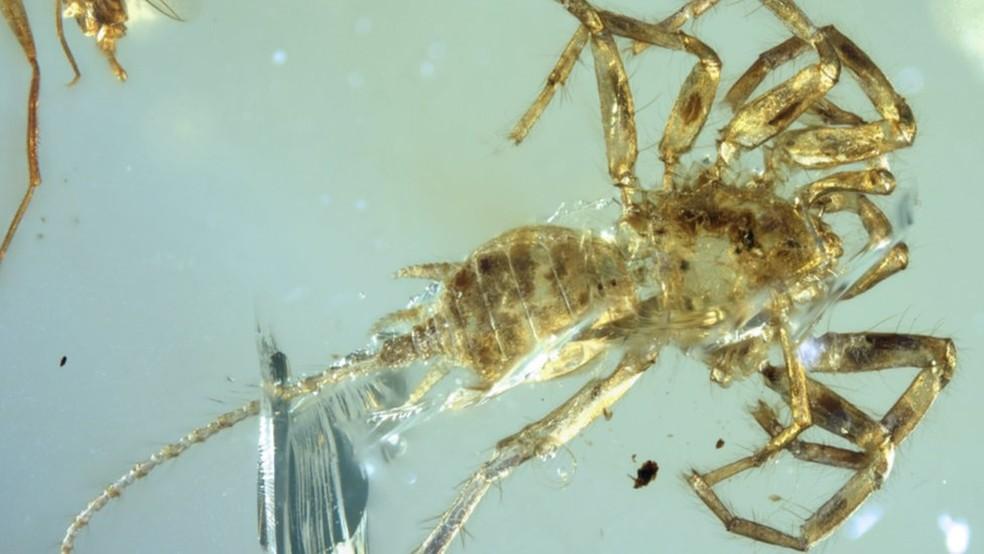 O animal tem presas parecidas com a da aranha e um órgão produtor de fios de seda na parte traseira (Foto: Bo Wang)