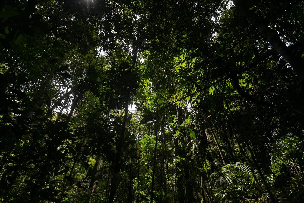 Copa das árvores na Amazônia — Foto: Marcelo Brandt/G1