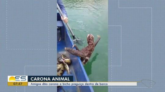 Vídeo mostra bicho-preguiça pegando 'carona' em barco em lagoa no ES