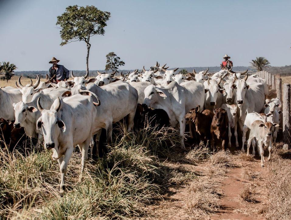 Especialistas discutem desafios e melhorias da pecuária de corte no Oeste de SC - Notícias - Plantão Diário