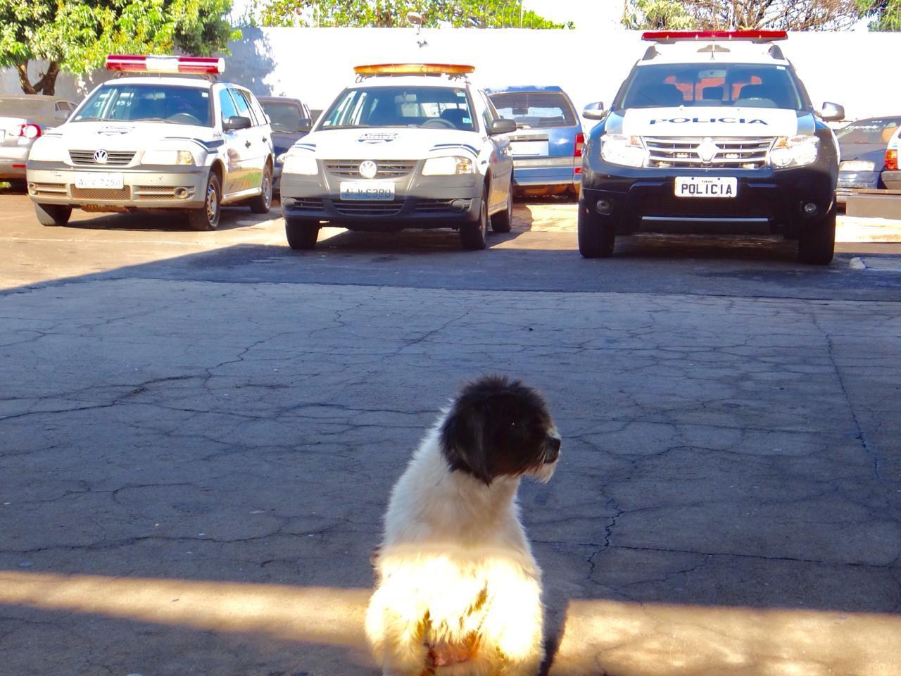 Cachorro espera em pátio de delegacia por dono preso, no interior do Paraná