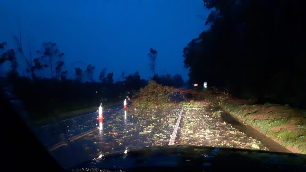 Na região de Paranavaí, houve registro de queda de árvore na BR-376 — Foto: Divulgação/PRF
