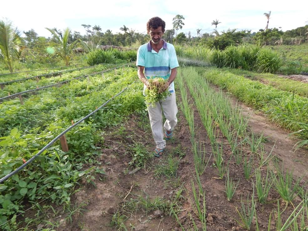 Há 11 anos as famílias de agricultores  cultivam plantações do assentamento Dalcídio Jurandir — Foto: Reprodução / MST