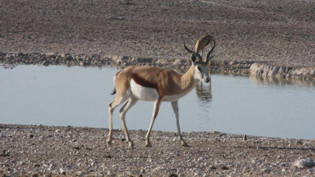 'A regeneração dos chifres desses animais é um fenômeno único', diz pesquisador (Foto: Mariana Veiga/via BBC News Brasil)