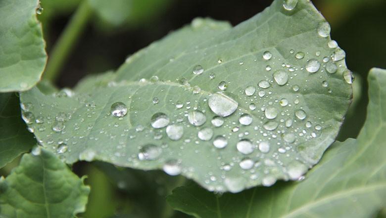 chuva, folha (Foto: Harish Kumar / Flickr)