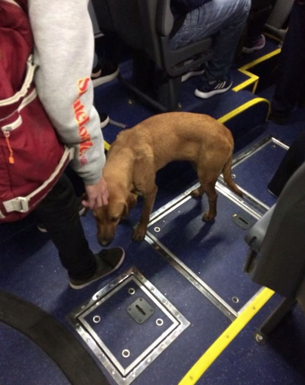 Animal ganhou carinho de passageiros durante o trajeto — Foto: Arquivo pessoal/Diogo Gutierre