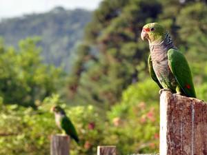 Aves soltas visitam moradores da região (Fot Vanessa Kanaan/Espaço Silvestre)