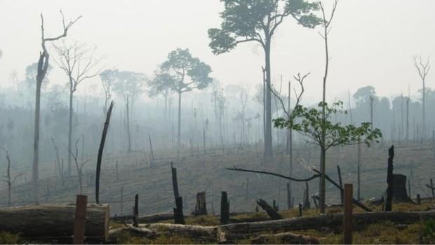 Estudo mostra que 27% do desmatamento global é decorrente da produção de commodities (Foto: Alexander Lees via BBC News Brasil)