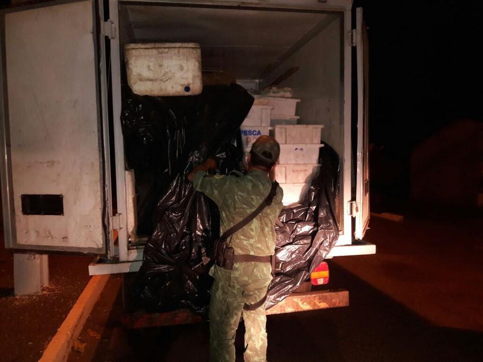 Peixes estavam sendo transportados sem licença ambiental (Foto: Divulgação/PM Ambiental)