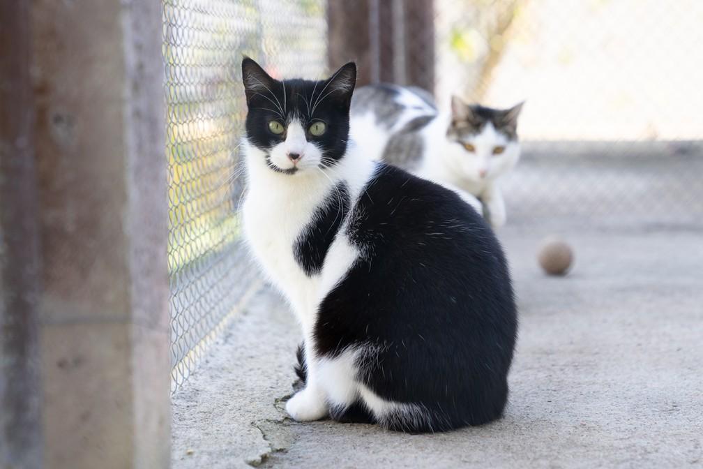 Apenas 4% dos animais abandonados sob cuidado de ONGs são gatos, aponta Instituto Pet Brasil — Foto: Marcelo Brandt/G1