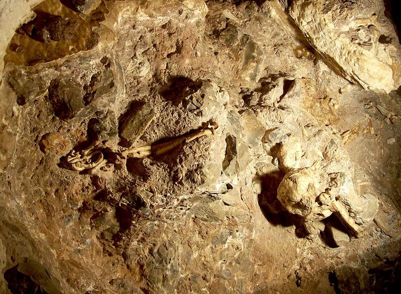 """Visão geral do """"pé-pequeno"""" em sua posição original na caverna de Sterkfontein, novembro de 2006. (Foto: Creative Commons / V. Mourre)"""