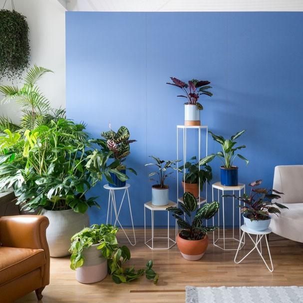 Como manter as suas plantas vivas durante as férias (Foto: Selvvva/Divulgação)